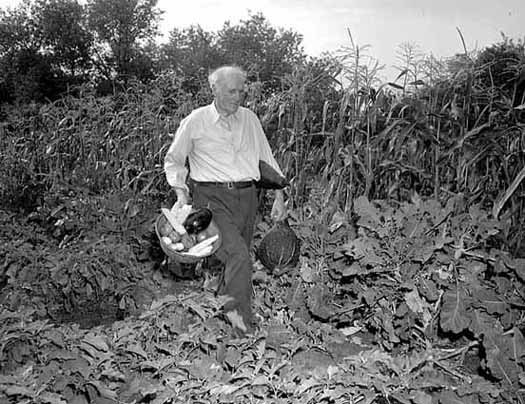 Watson Davidson in his garden at his home on Summit Avenue in 1949.