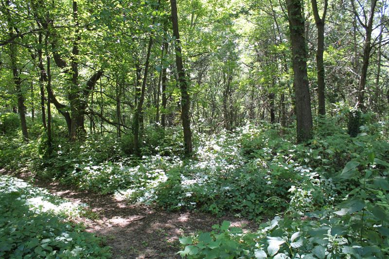 Municipal Forest